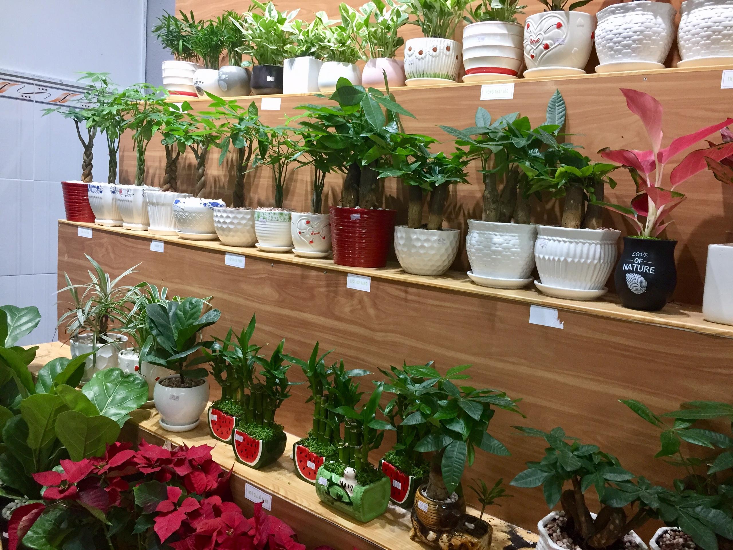 Mua cây phong thủy tại Vườn Cây Việt - Tại sao không?
